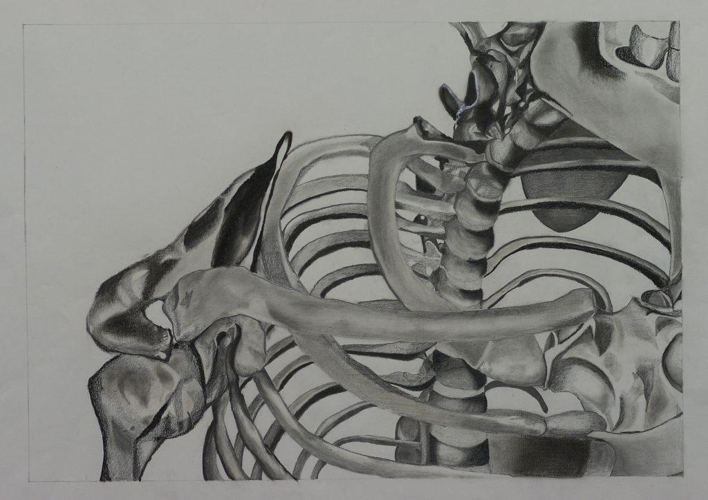"""Study of Shoulder/Neck <br>2012 <br>charcoal, graphite, ink <br>18"""" x 24"""""""